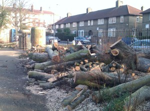 Tree felling in progress